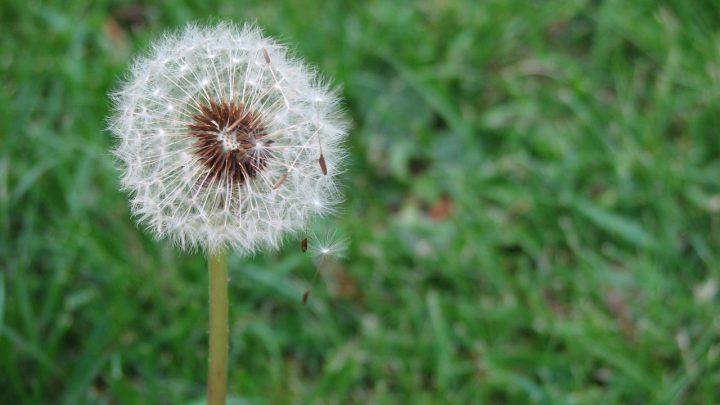 Obfite plony z małego nasionka